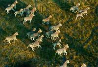 Национальные парки Замбии