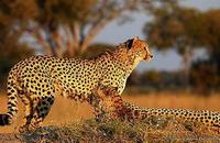 Национальный парк Чобе - Ботсвана