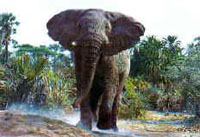 САФАРИ ВЕРХОМ НА СЛОНЕ (Требуется виза в Зимбабве)